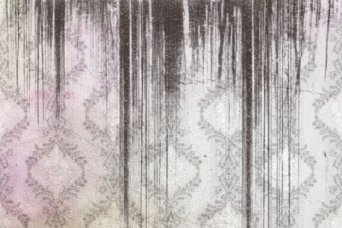 damp_and_mould_thumbnail