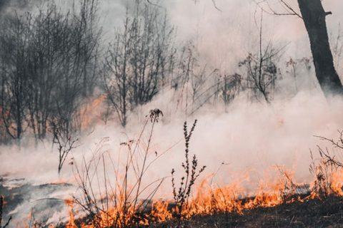 smoke_and_bushfire_thumbnail